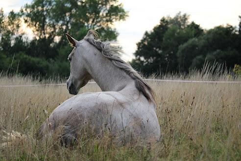 أجمل صور خلفيات خيول 16
