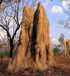A Termite Hill in Namibia