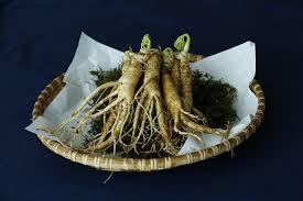 Tanaman Herbal: