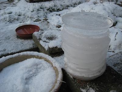 Frozen Bird Water 2010Dec23-7rings