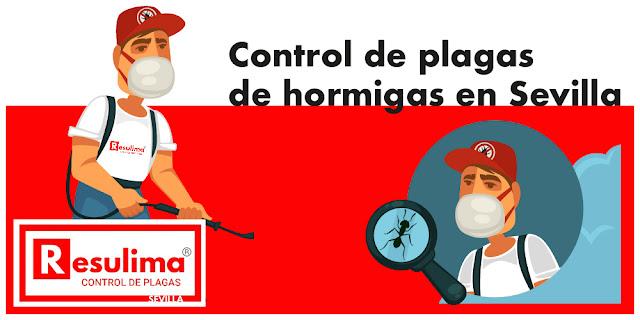 control plagas de hormigas Sevilla
