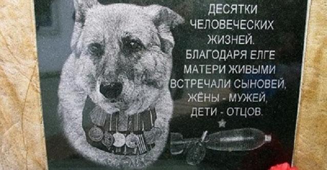 Невыдуманные истории собак-героев!