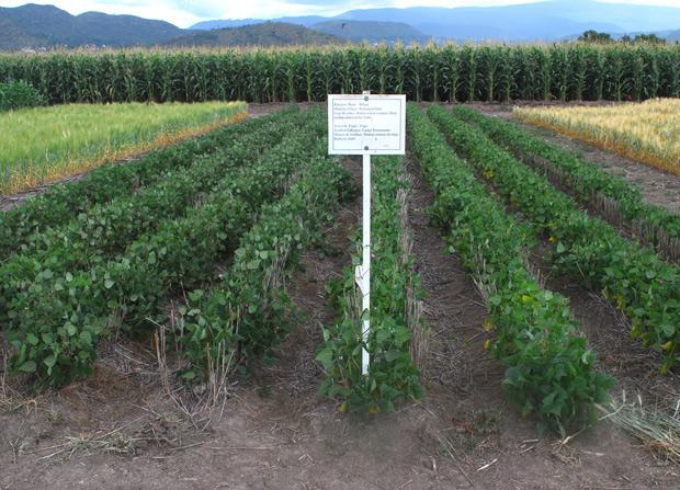 Experimental Crops