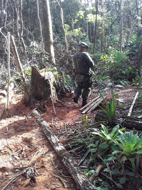 Corte Isolado de vegetação nativa em Cananéia