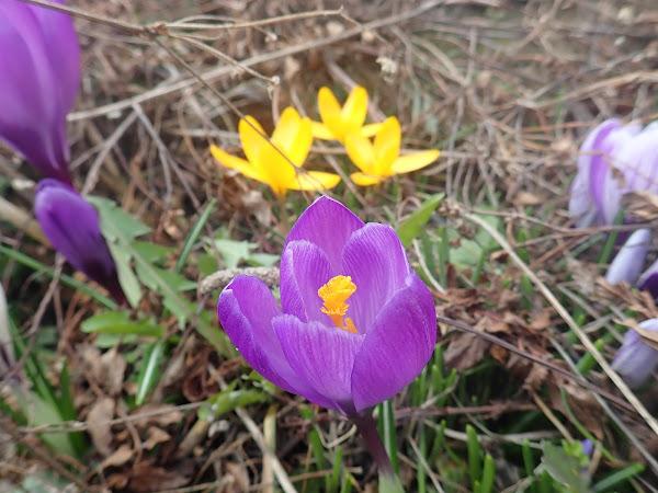Flower by Raederle