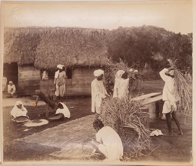 Indentured labourers in Trinidad