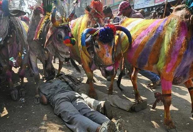 Ritual of Cow Trampling