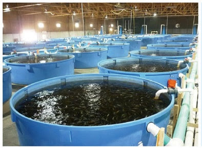 Intensive Aquaculture System