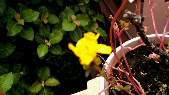Small Bright Yellow Flower Photography | From'S Photography