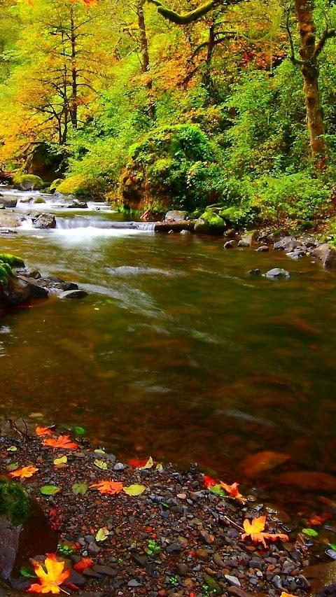 Con suối nhỏ vào mùa thu