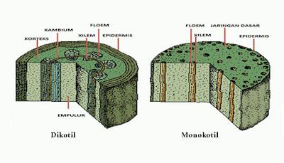 Hasil gambar untuk struktur luar batang