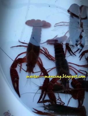 Mancing Lobster Air Tawar, Anda Juga Bisa