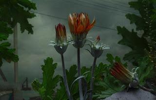 Ύμνος στα «περιθωριακά» λουλούδια [video]