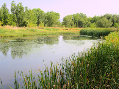 jordan river nature wetland parkway