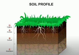 soil horizon diagram