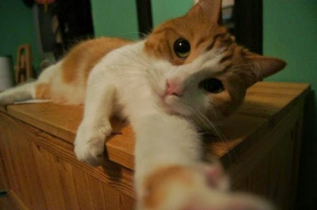 cats-taking-selfies-4