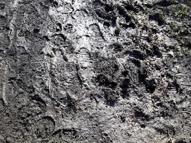 Image shows footprints in mud