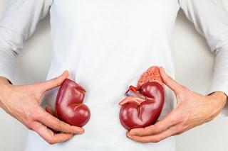 Mengetahui Fungsi Dari Organ Ginjal PFI Mega Life