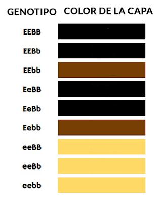 Laborador-Colores-Tabla-4