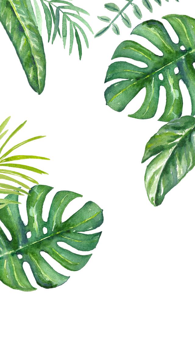 DLOLLEYS HELP: iPhone 5s Jungle Leaves Wallpapers