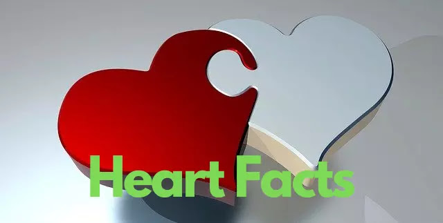 100+ Unknown Facts About Heart In Hindi that didn't know you