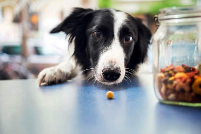 Przysmaki Ontario dla psa