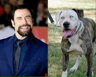 Perros que se parecen a sus dueños famosos - John Travolta