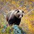 После выхода медведя в город в Ухте отстрелят ещё двух хищников