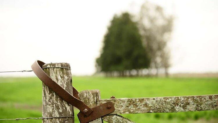 Mercado inmobiliario rural, fuerte aumento en la compraventa de campos