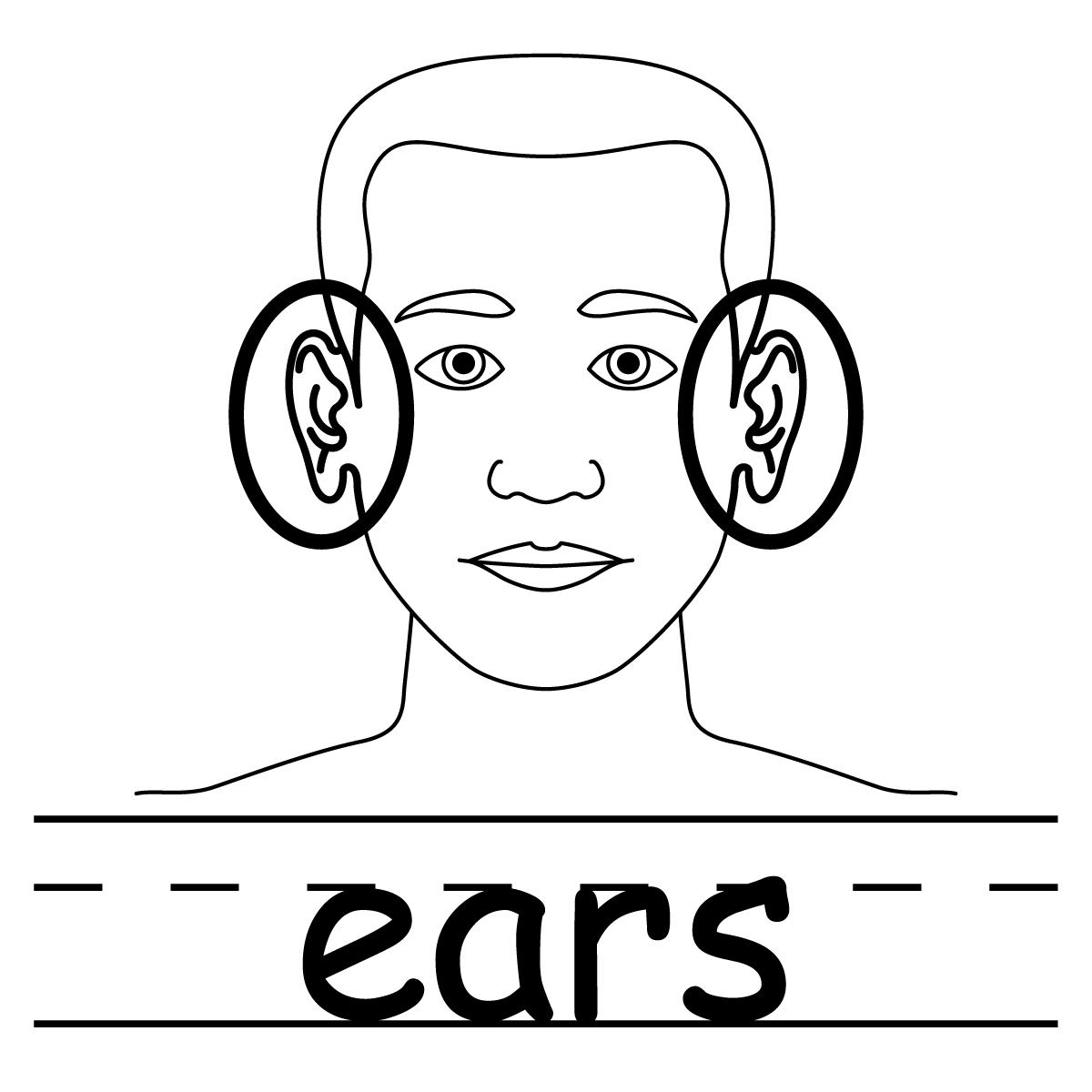 Fichas De Ingles Ficha Face 5 Flashcard Ears