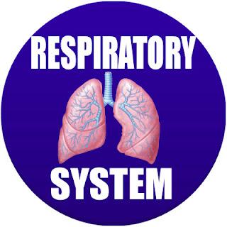 respiratory system in spanish