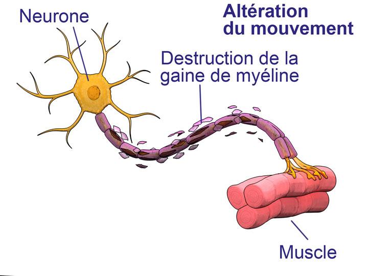 100 milliards de neurones vivre deconnecte for Influx nerveux