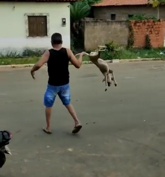 MATÕES - Vídeo de homem que pega cachorro pelo rabo e roda por seu corpo revolta internautas