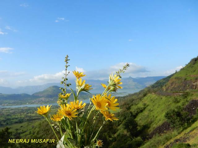 Flowers in Maharashtra