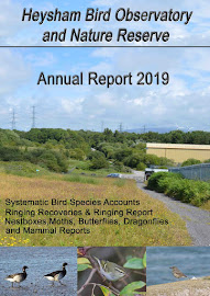 2019 HEYSHAM OBS REPORT AVAILABLE NOW