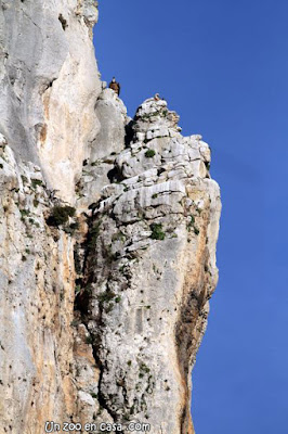 Buitres en el acantilado