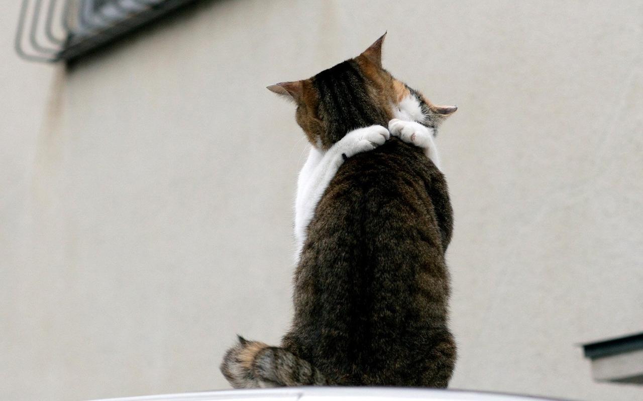 Cute animals showing some love [45 Pix] | Pix Bag