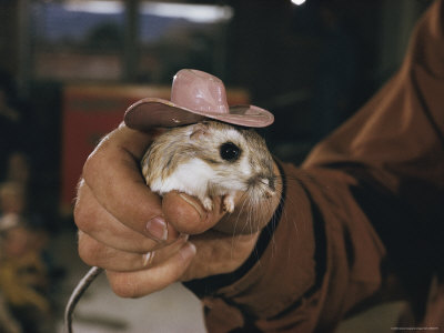 AHEAD ON THE LEFT  Kangaroo Rat with Cowboy Hat Leading in ... 7767f7b9df3