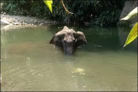 पढ़े लिखे गवाँरो की इंसानीयत :  Kerala Elephant Death