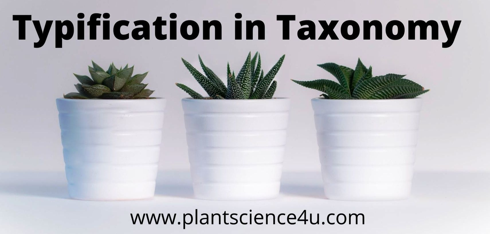 Typification in Taxonomy
