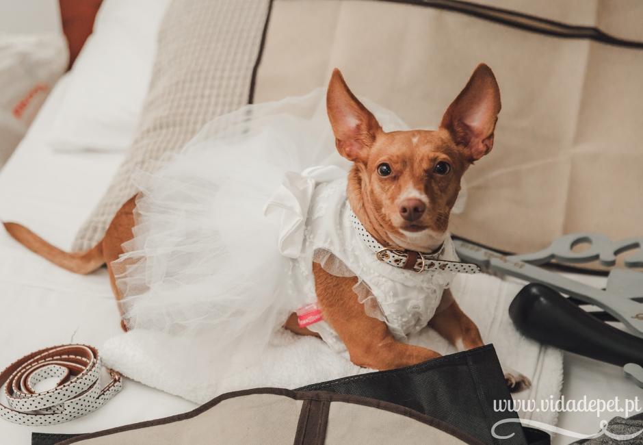 A cadela entregou as alianças no nosso casamento + vida de pet + blogue português sobre animais de estimação + dicas para educar animais domésticos + cães + gatos + pedro e telma