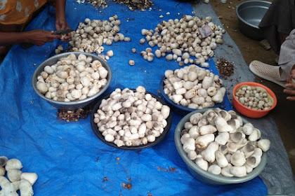 2 Usaha Agribisnis yang Menguntungkan di Desa