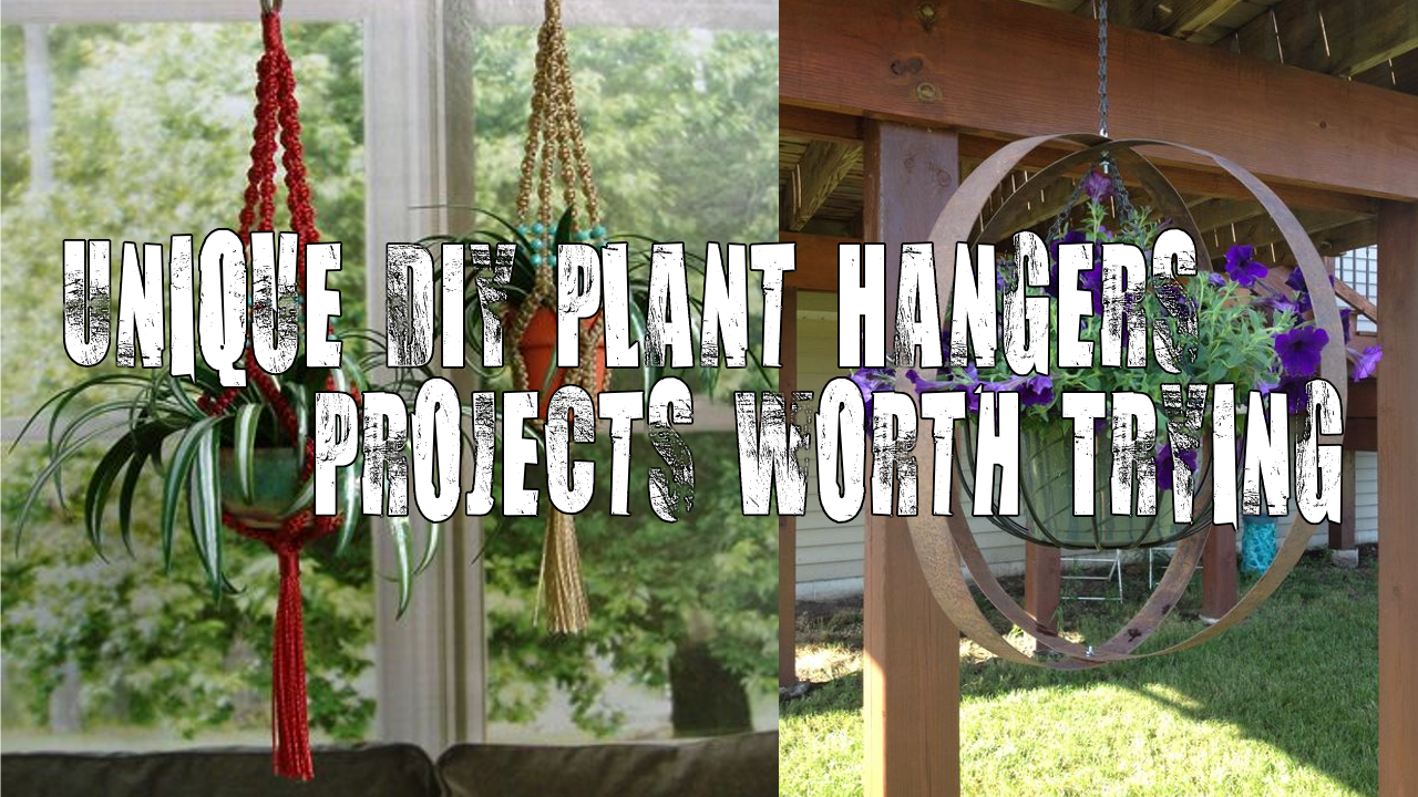 Unique DIY Plant Hangers Projects Worth Trying