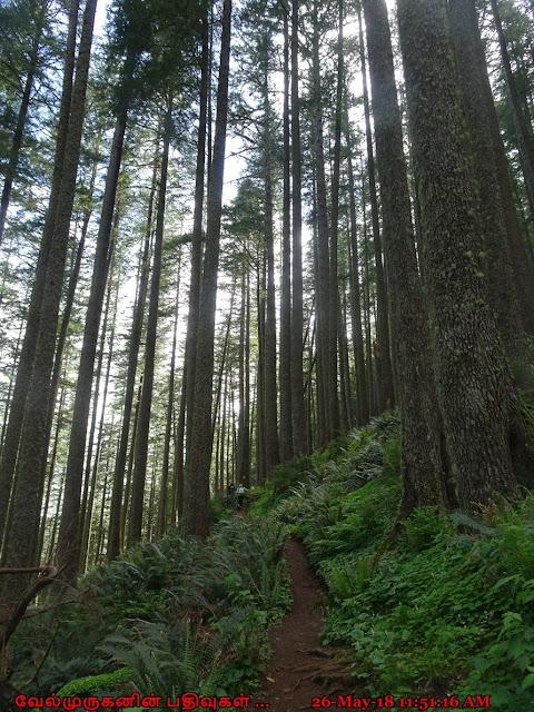 Oregon Coast Trail Neahkahnie Mountain