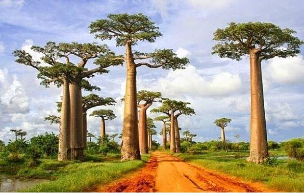Miris! 7 Tempat Menakjubkan Ini Terancam Punah dari Muka Bumi