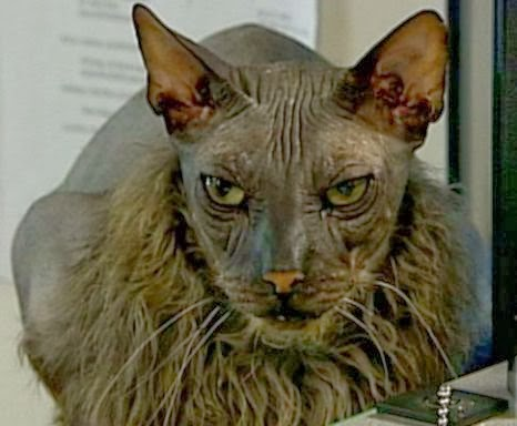 Most Famous Cats: Worlds Ugliest Cats