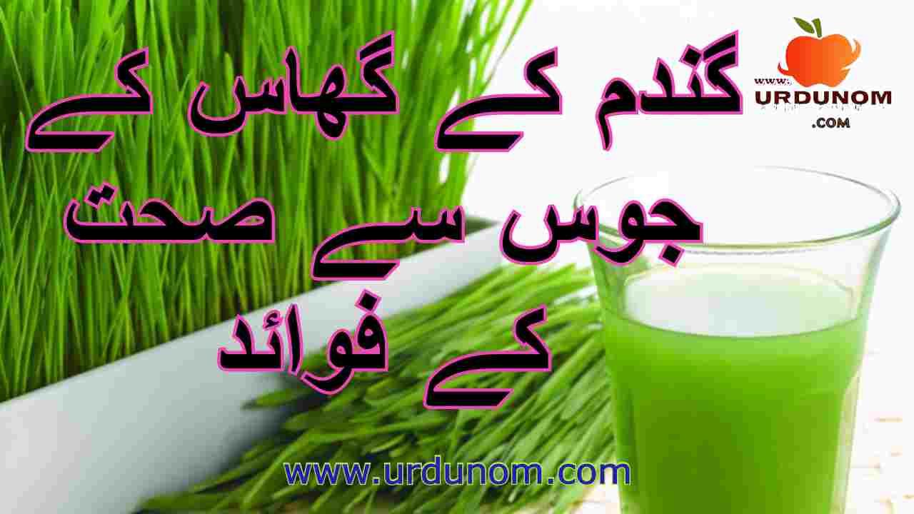 Benefits of wheat grass drinks in Urdu