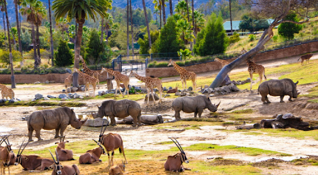 Dicas para ir ao San Diego Zoo Safari Park em San Diego