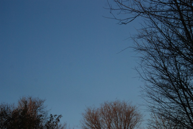 azzurro cielo alberi inverno