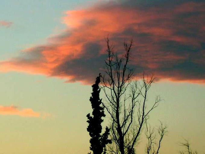 δέντρο - σύννεφο